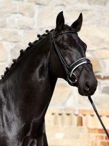 equine 4